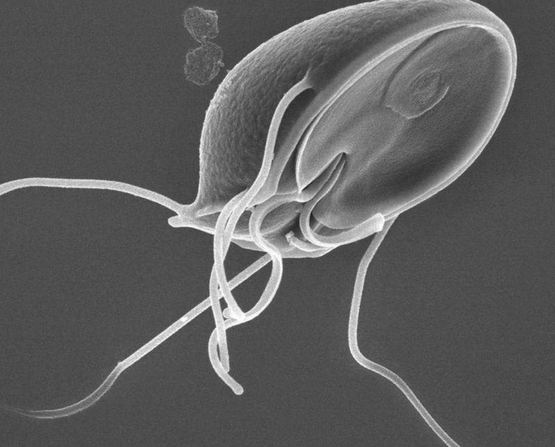 препарат от паразитов для человека