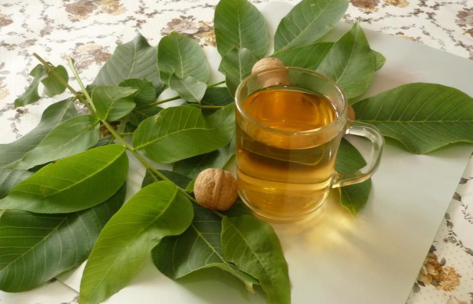 Настойка керосин грецкий орех в домашних условиях