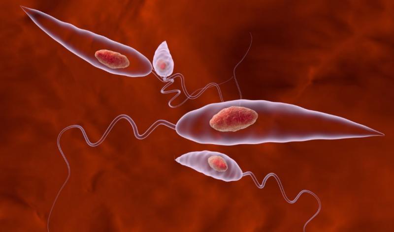 паразиты в кишках человека