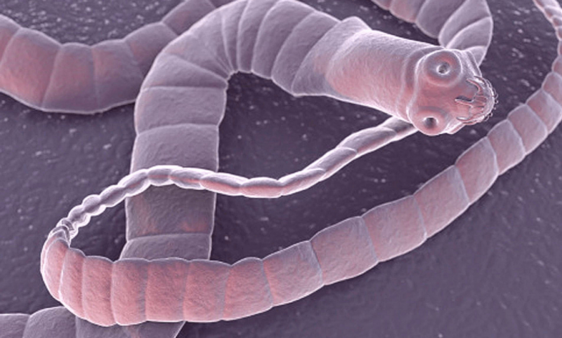 интоксик от паразитов