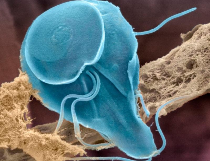 деготь от паразитов