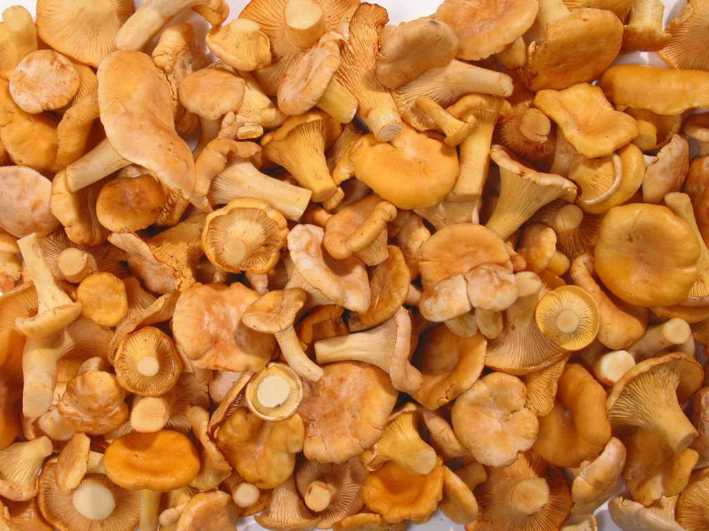 частицей мощей свойства замороженных грибов лисичек ролях: Амитабх Баччан
