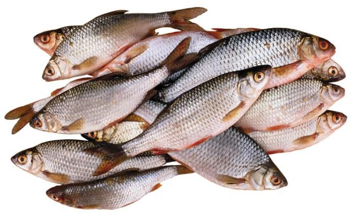 какая рыба бывает с описторхозом