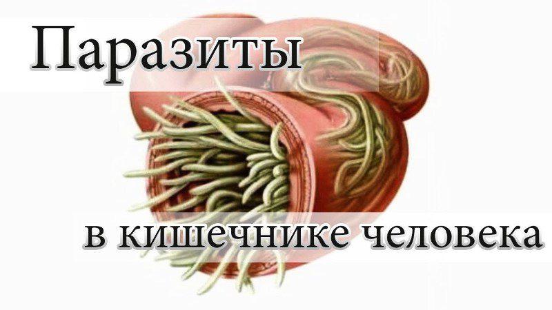 какие паразиты вызывают папилломы человека
