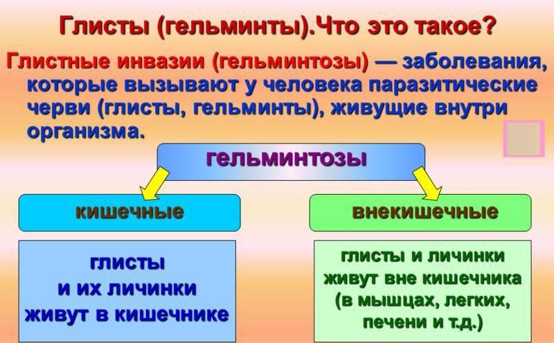 Гельминтоз развитие
