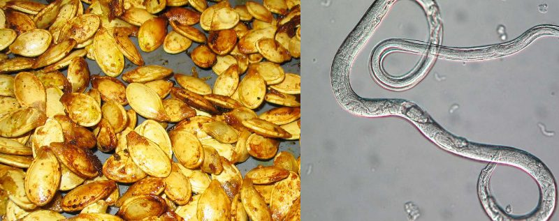 тыквенные семена от глистов