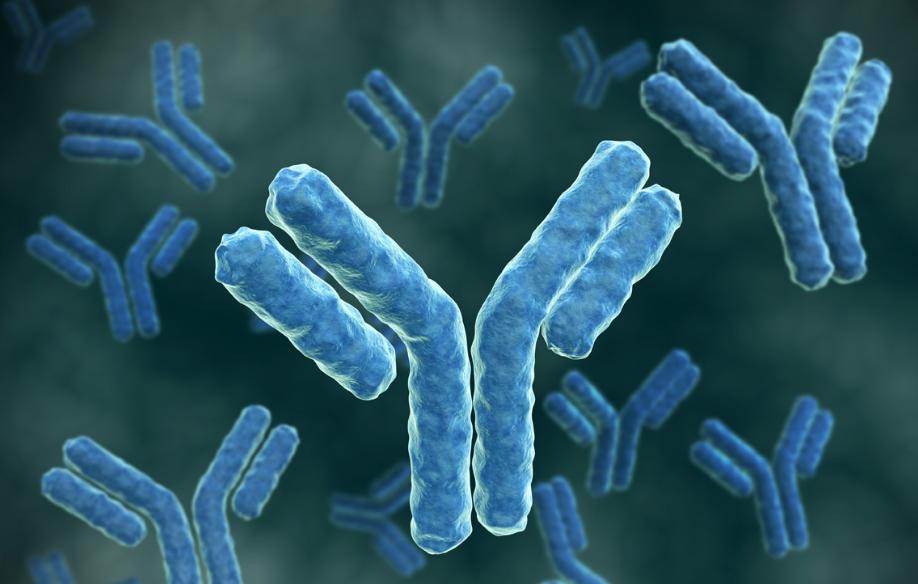 антитела при заражении микоплазмой когда появляются