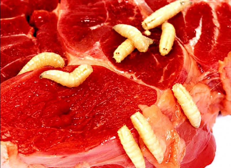 глисты в мясе