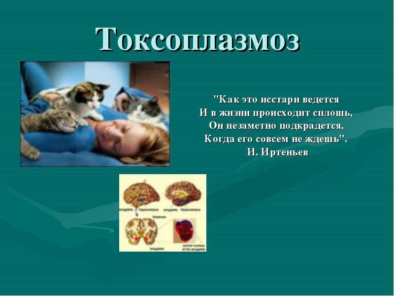 токсоплазмоз