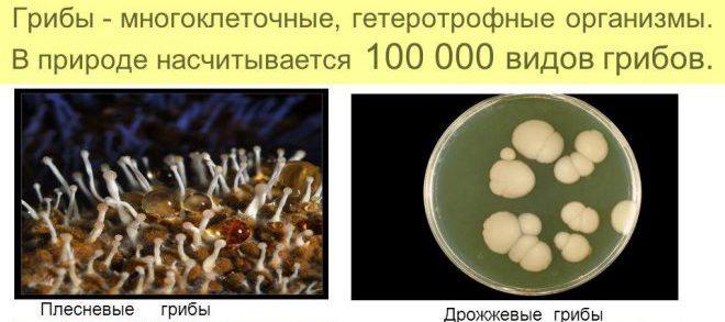 диагностика грибка
