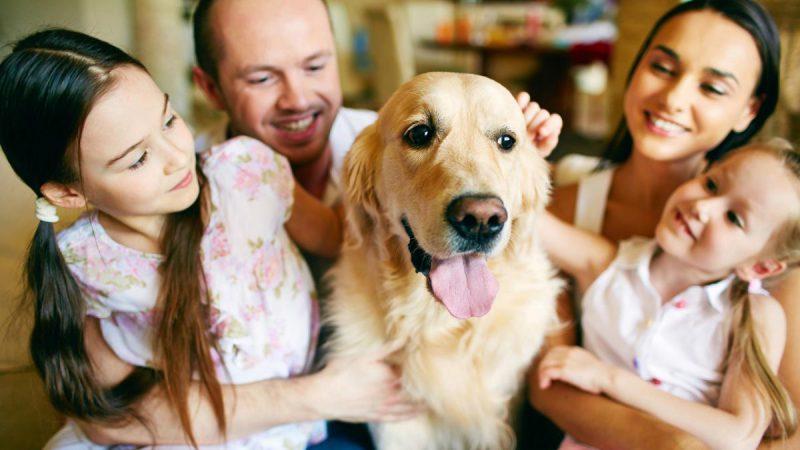 собака, как причина появления глистов