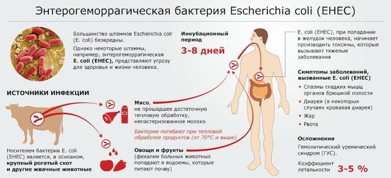 пути заражения кишечной палочки