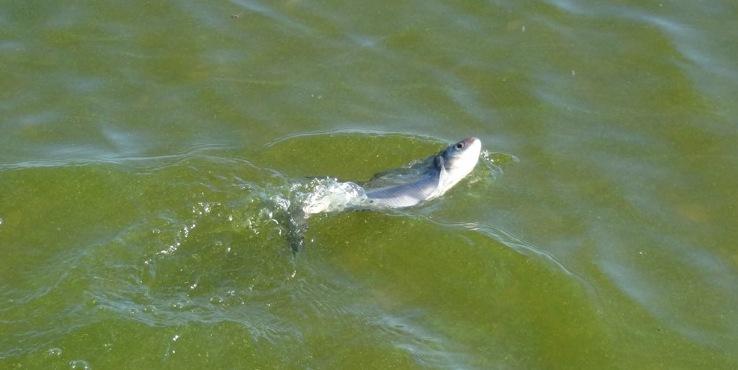 рыба не может погрузиться под воду