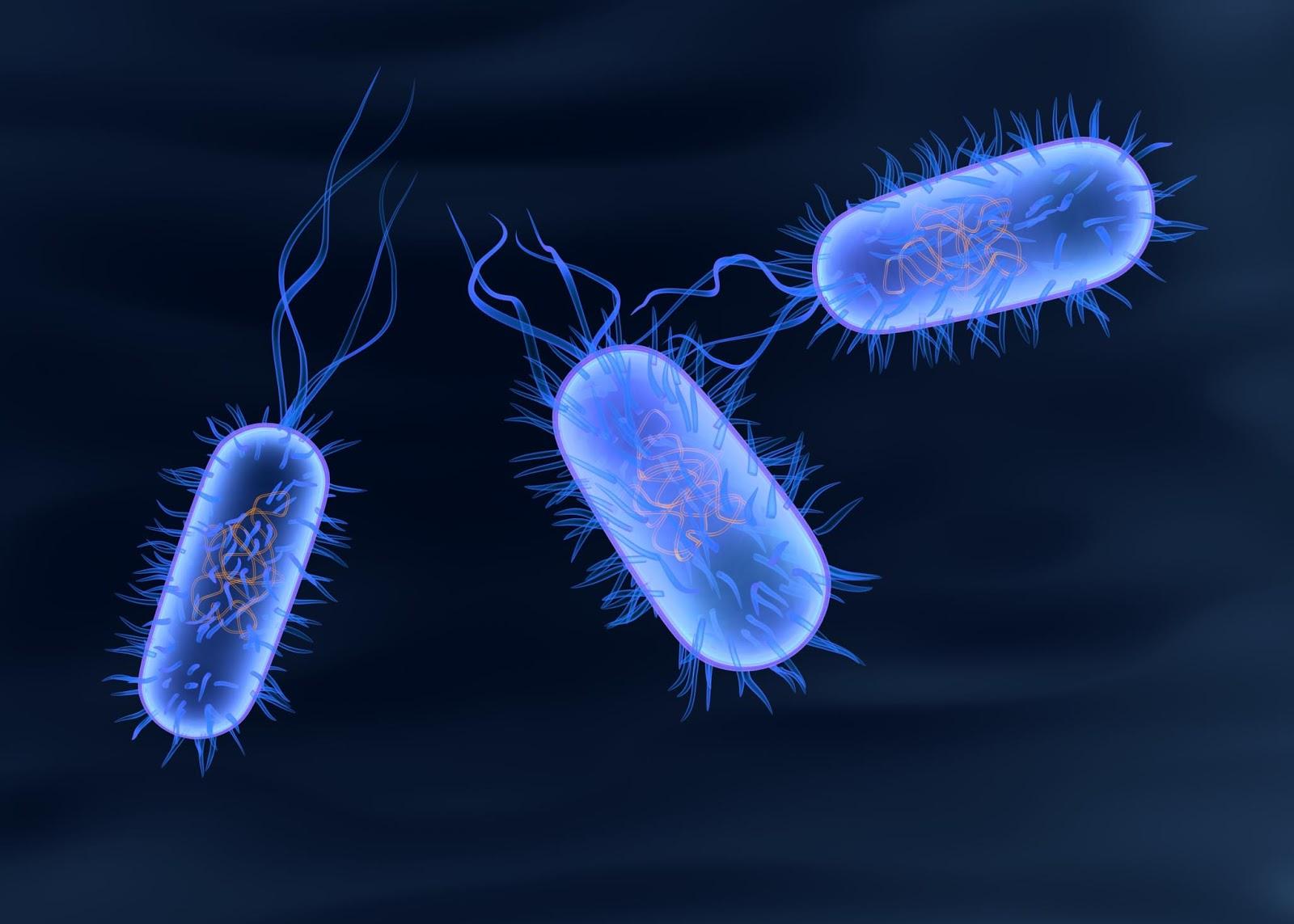 salmonella typhi typhoid fever