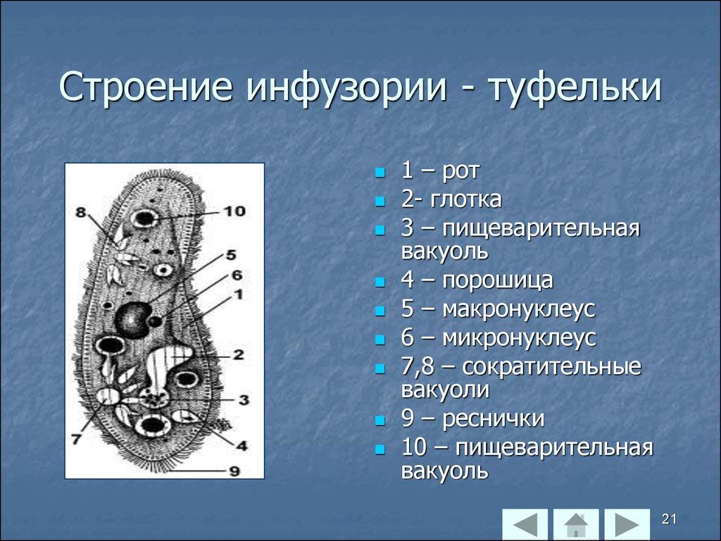 ГДЗ по биологии 7 класс. Рабочая тетрадь Латюшин Ламехова