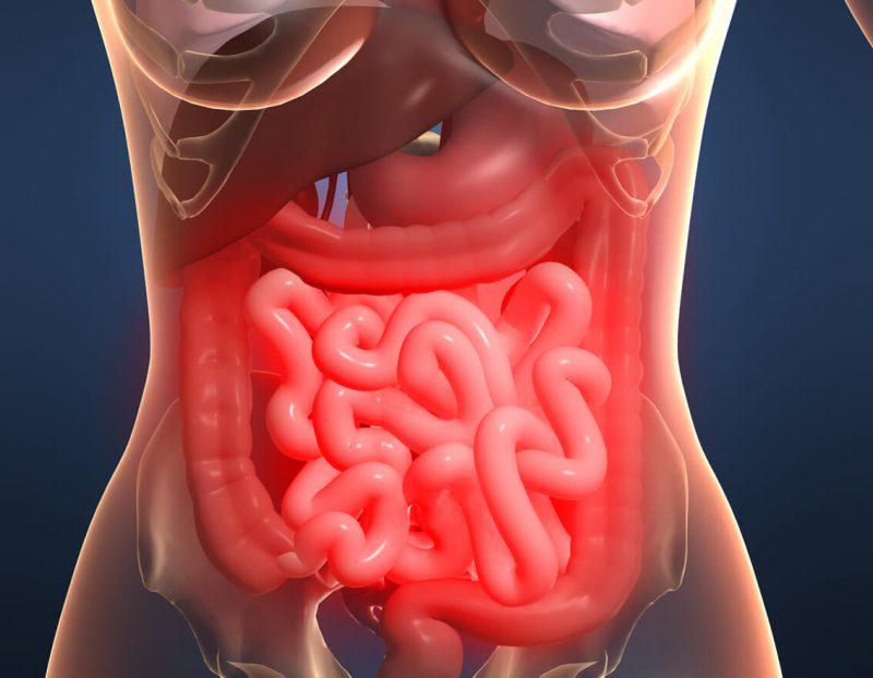 фото кишечника