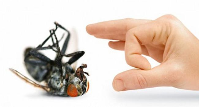 меры предосторожности от мух