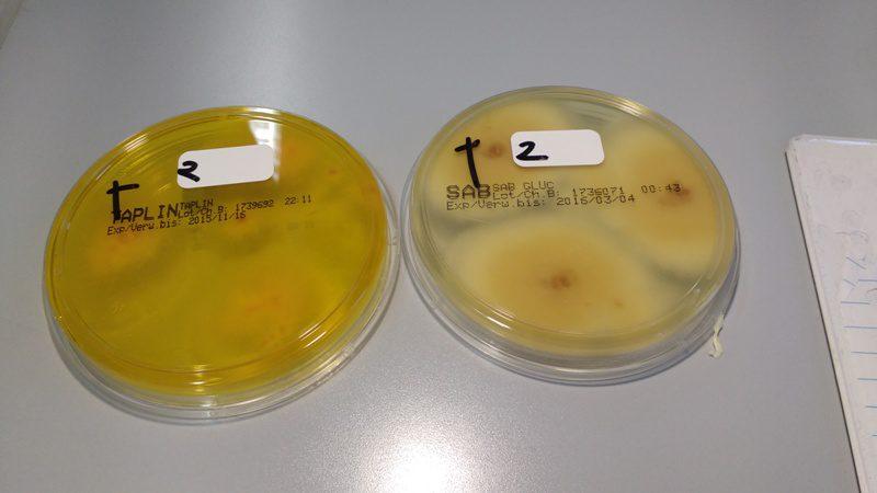грибки в лаборатории