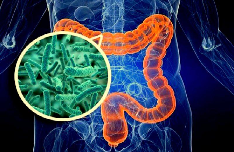 дезентерийная палочка в кишечнике