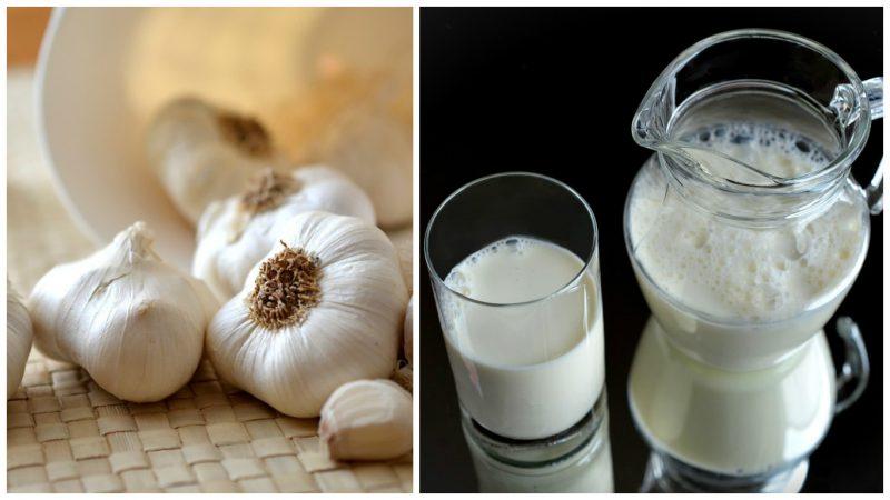 терапия от глистов - молоко с чесноком