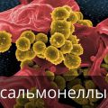 Признаки сальмонеллеза у человека