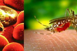 Что такое малярия: симптомы, диагностика и лечение