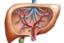 Эхинококковая киста: определение и лечение