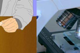 Как правильно сдавать анализ кала на яйца глист