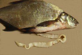 Опасность солитера в рыбе для человека