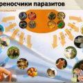 Паразитарные заболевания: симптомы и виды
