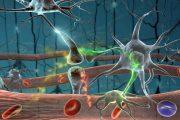 Паразиты в организме человека: основные способы заражения, симптомы, диагностика и лечение