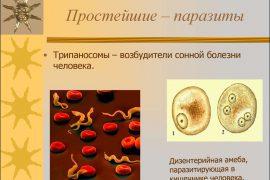 Таблица паразитических простейших