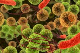 Очищение организма в домашних условиях — лучшие способы