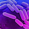 Клебсиелла пневмония: симптомы и лечение