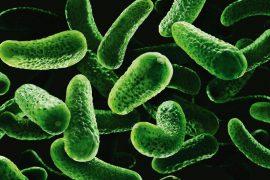 Сальмонеллез: симптомы и признаки у человека