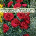 Тройчатка Иванченко: средство, которое помогает от паразитов