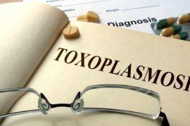 Как правильно сдавать анализ крови на токсоплазмоз