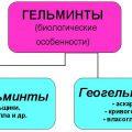 Геогельминты и биогельминты