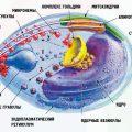 Малярия: признаки и диагностика заболевания
