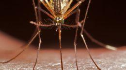 Симптомы малярии, лечение и профилактика