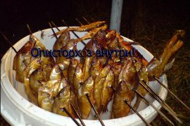 Как готовить рыбу чтобы убить описторхоз