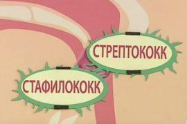 Гемолитические стафилакокковые и стрептококковые инфекции