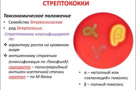 Какие заболевания вызывают стрептококки различных групп