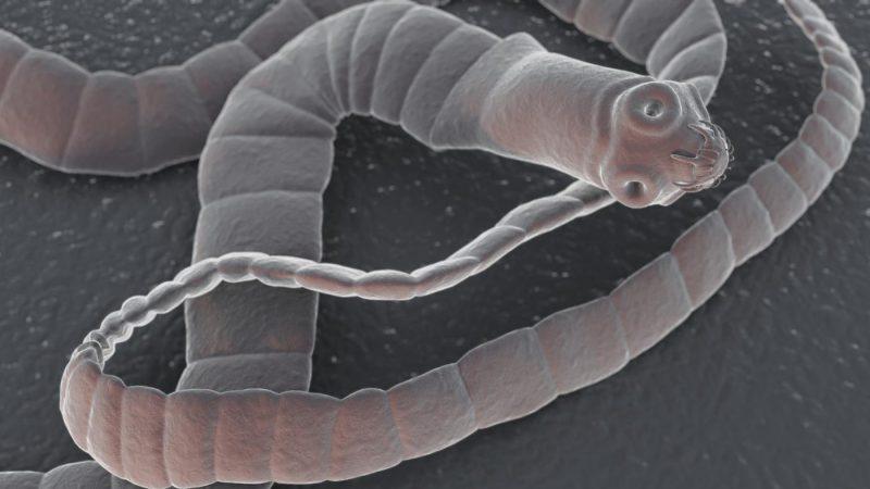 Желудочные паразиты