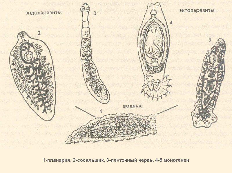 Виды червей