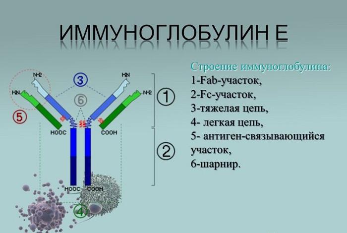 Иммуноглобулин е