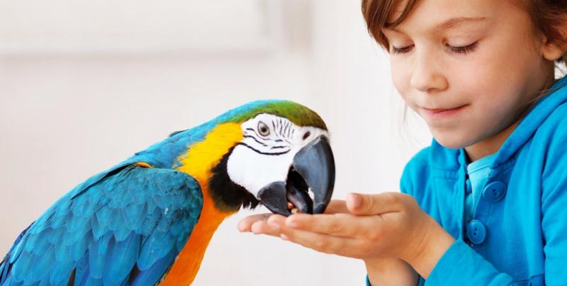 контакт с птицами