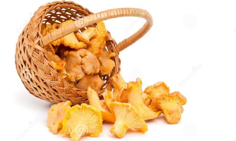 грибы-лисички от глистов