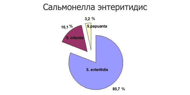 сальмонелла энтеритидис