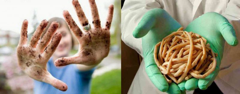 Как определить наличие паразитов в организме